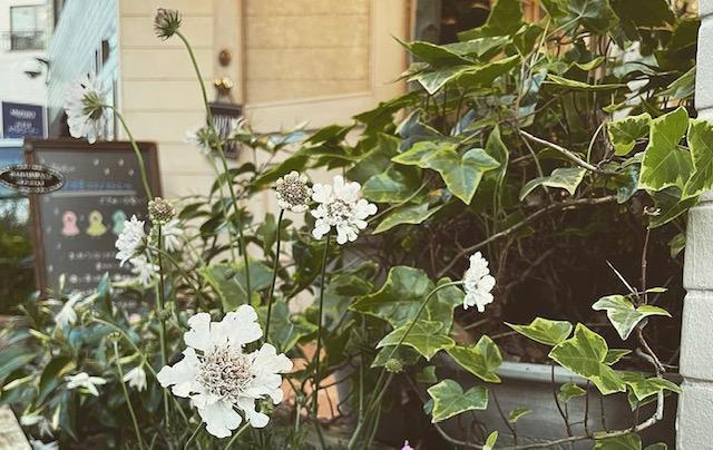 花壇のお手入れ🌻