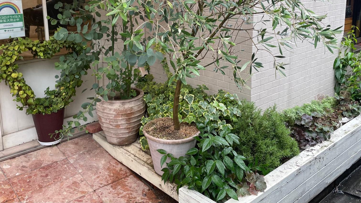 軒先の花壇を入れ替えしました!ひまわりも咲いてくれてます🌻